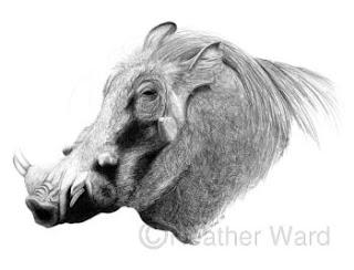 warthog graphite drawing