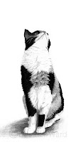 calico domestic cat drawing