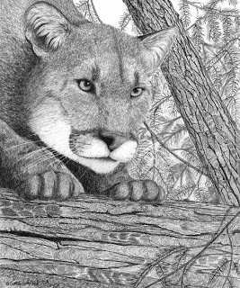 cougar drawing