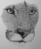 cougar drawing in progress