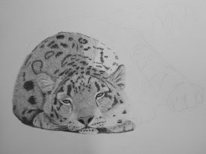 snow leopard drawing in progress