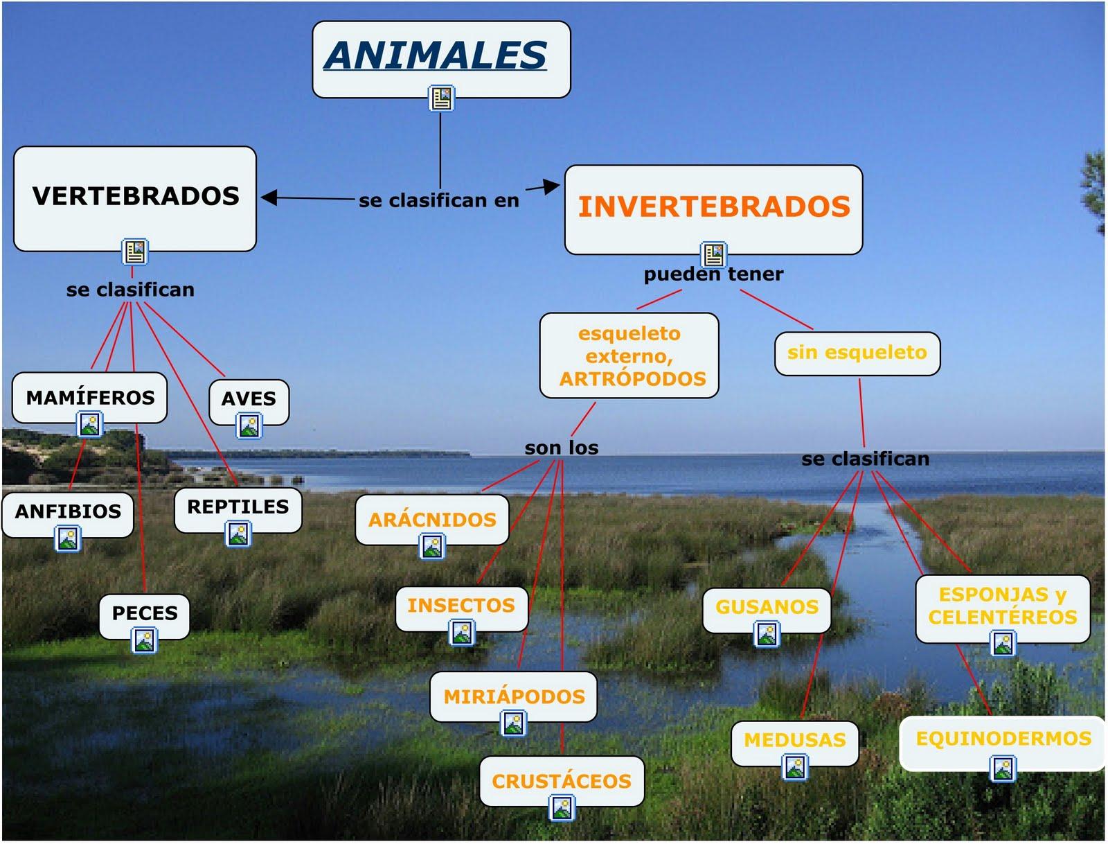 imagenes de animales vertebrados e invertebrados - ANIMALES VERTEBRADOS E INVERTEBRADOS