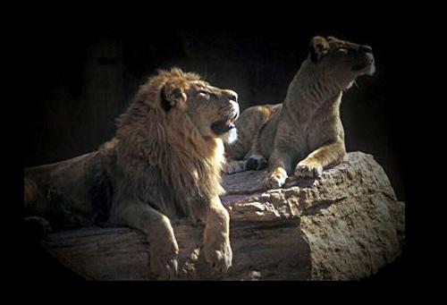 El cuento de los tres leones