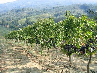 Viini, Toscana