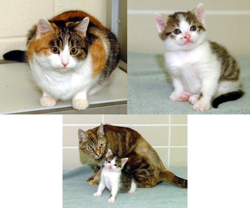 El Primer Gato Clonado