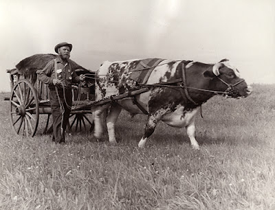 Delmar Hagen during 1958 Minnesota Centennial oxcart trek