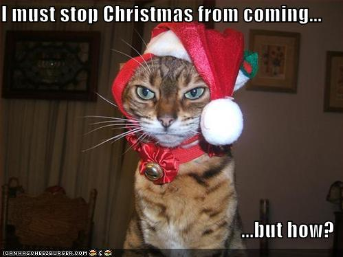 [funny-pictures-cat-stops-christmas.jpg]