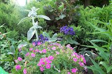 lato w moim ogrodzie