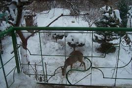 sarnia walentynka