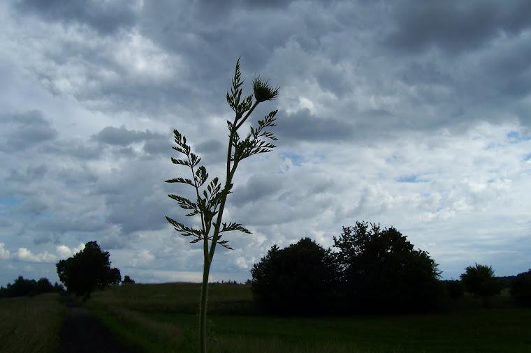 piękno łąk