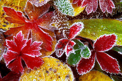 http://2.bp.blogspot.com/_shNfb4kWu0g/SMeW0wPpE6I/AAAAAAAABN8/RMyb95Czzgc/s400/Frosted-Fall-Leaves.jpg