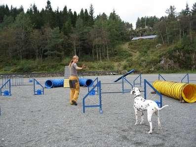 velge hund Bergen