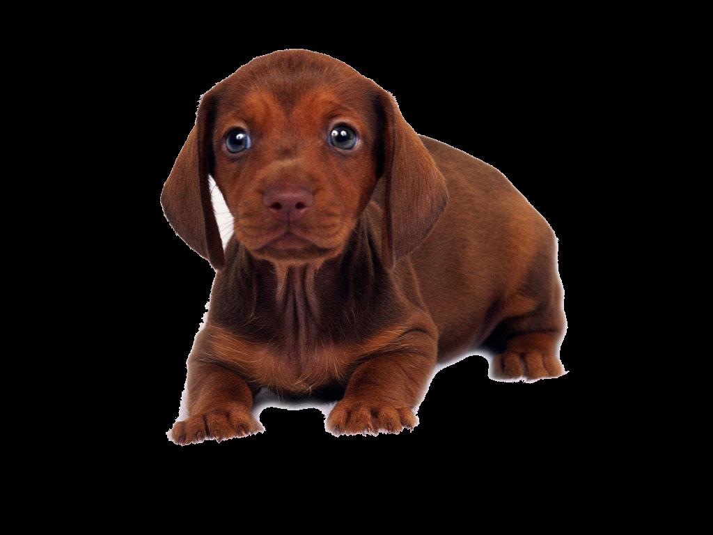 Raza De Perros De Acuerdo A Su Tama 241 O El Mejor Amigo Del