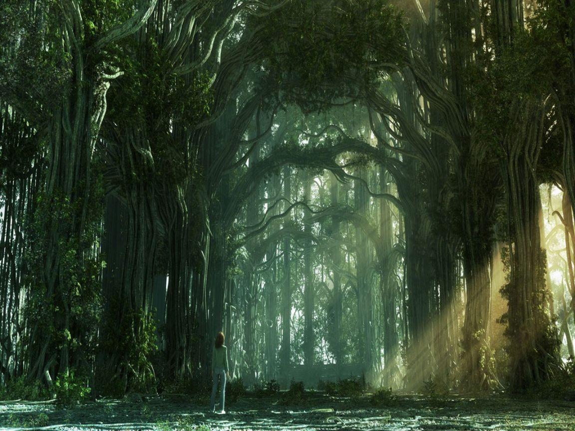 Floresta        Floresta