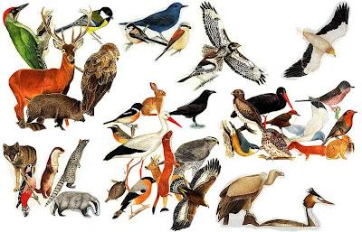 Biodiversidade Faunística