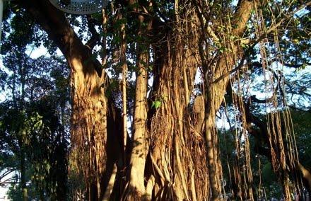 Floresta Estadual Antimary
