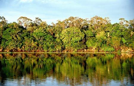 Floresta Estadual de Maués