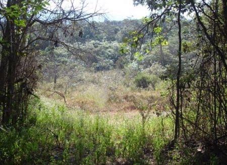 Floresta Estadual de Uaimií