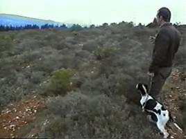 Ο Εκπαιδευμένος και ο Ανεκπαίδευτος σκύλος