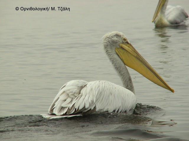 «Με το έτσι θέλω» η άσκηση κυνηγιού στο παγκόσμιας σημασίας Εθνικό Πάρκο Αμβρακικού