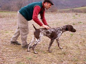 Ο Ρόλος των Κυνηγετικών δοκιμασιών και του συστήματος ανάδειξης  σε συνάρτηση με τον κυνηγετικό σκύλο.