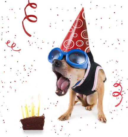 Chihuahua Birthday Cake Recipes