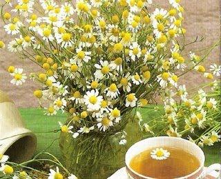 Camomila:Um chá de beleza, saúde e sorte pra você