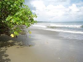 Pantai Sampiro, Bolmut