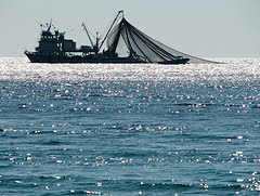 photo of trawler from adstream via flickr http://www.flickr.com/photos/adstream/1537402364/
