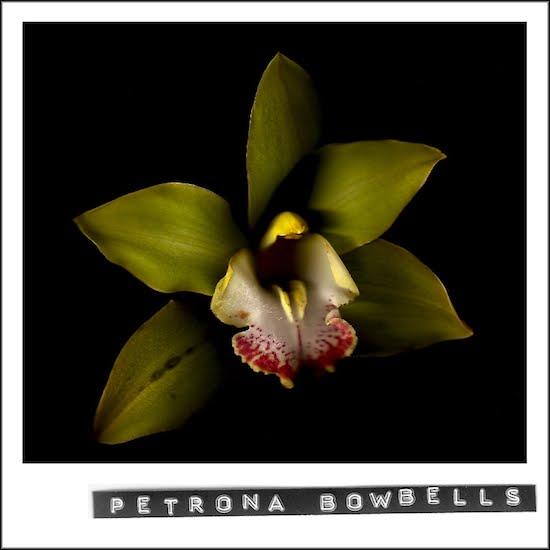 Petrona Bowbells