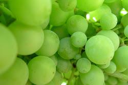 verde,verd,green