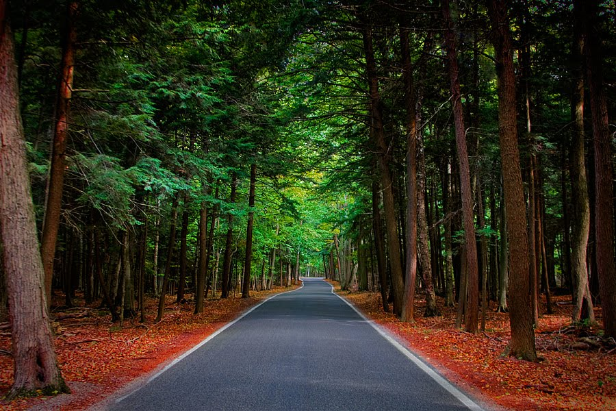 Indigo Highways Road Amp Route Trip Ideas With Bluegreen Resorts Tunnel Of Trees A Road To Make