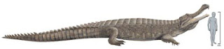 Super Crocodile Fossil Found in Sahara