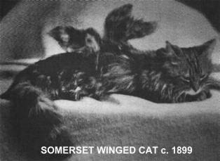 Winged Cats photos pics gallery