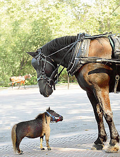 World's Smallest Living Horse by Guinness World Records pictures images pics photos gallery