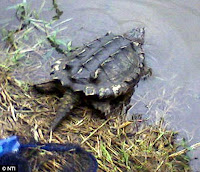 Mr. Drew Hammonds and turtle photos images gallery