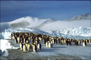 March of the Emperor Penguins migrations picture image pic photo gallery in nature phenomena blog number 1
