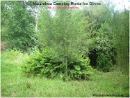 Naturaleza Monte los Olivos