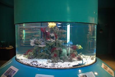 Kota Kinabalu Marine Aquarium And Museum At University