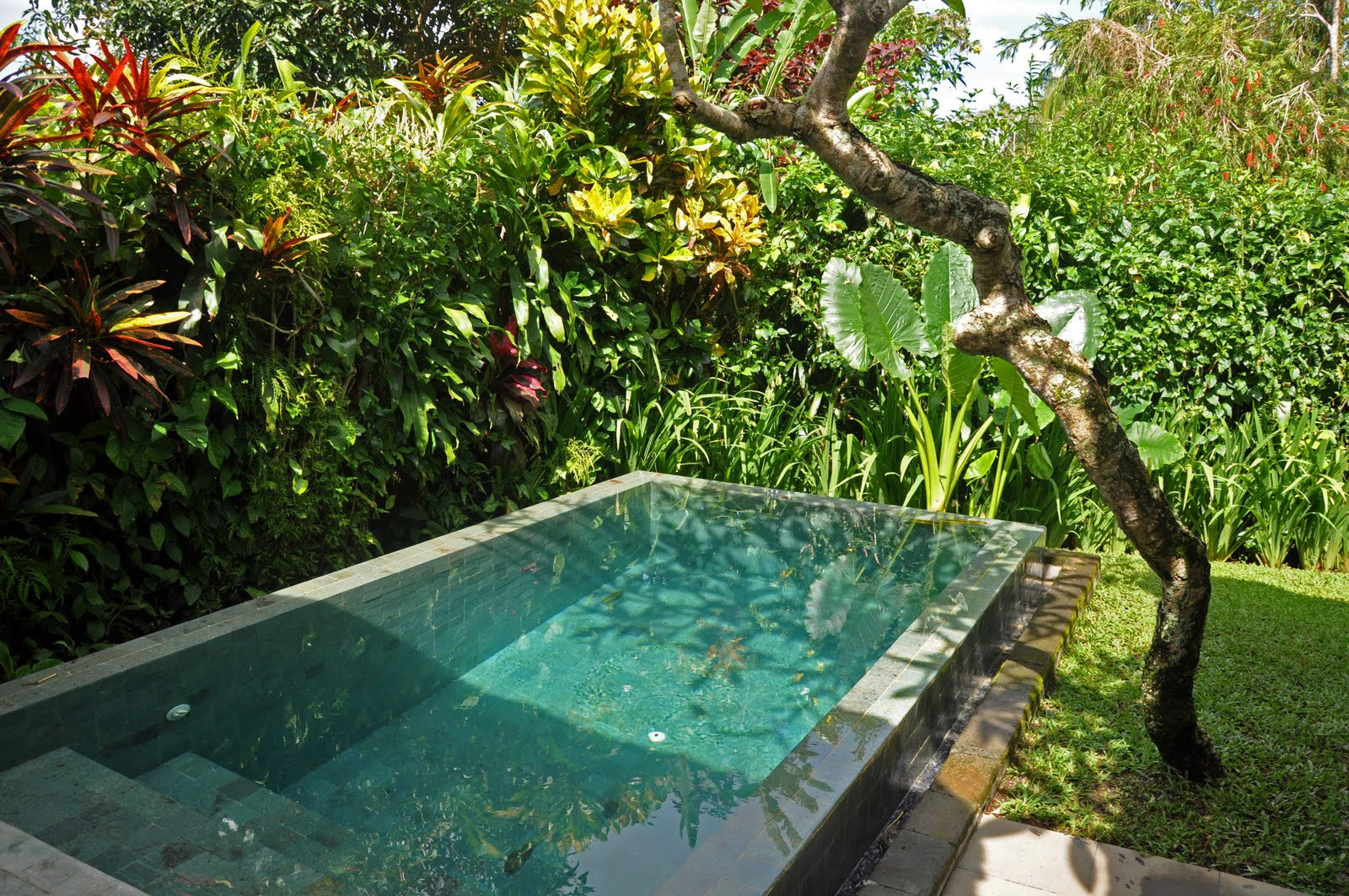 Bali 2010 maya ubud for Plunge pool design uk