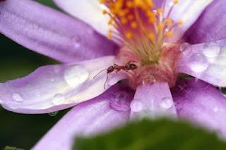 beslenmek, iletişim, Ilginc, ilginç, karınca