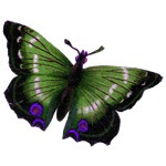 <br />Green Butterfly Tattoo