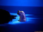 PERRO EN EL AGUA. ESTA ES PARA SABER COMO SE TRABAJA EN CONALEP O POR LO . (playa azul en el anochecer)