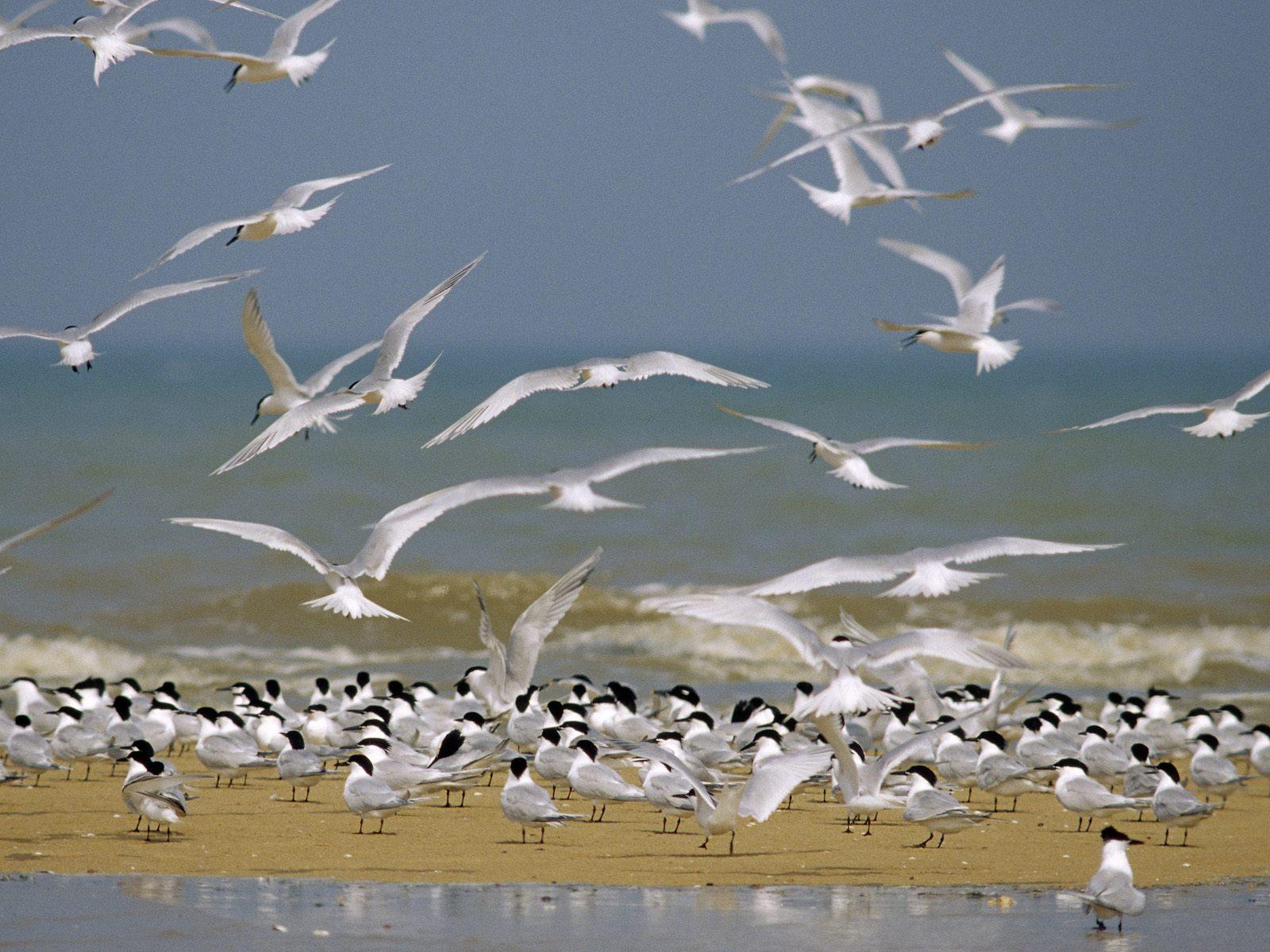 http://2.bp.blogspot.com/_sz2fJjO1XW8/THPiHvuC2PI/AAAAAAAAB9I/WUqOBszucww/s1600/Windows_7_Wallpaper_-_Beach_Seagulls.jpg