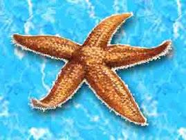 Adoro o mar e as estrelas....