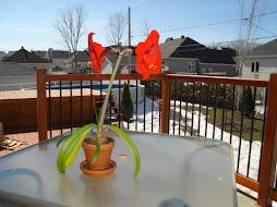 e no nosso quintal, a primavera....