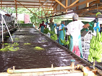 banana plantation packaging plant2 Photo Friday   Banana Plantation Packaging Plant in Limon Costa Rica