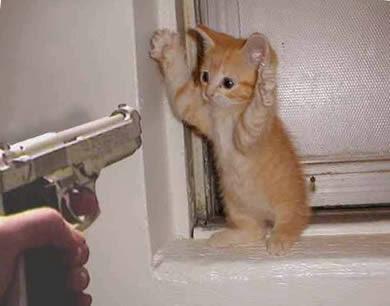PIANO BAR CONVIVIO --------FEEEEESTAAAAAAAA Gato-inocente