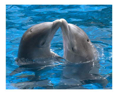 Kissing a dolphin on the nose