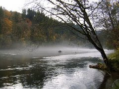 "Link to Kathy's ""McKenzie River"" Website:"